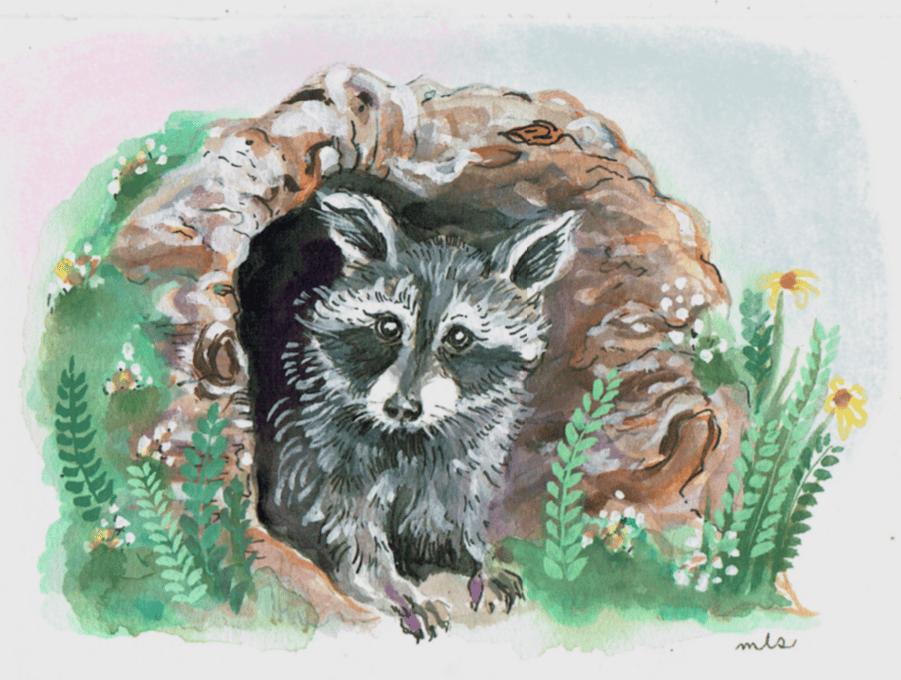 Image of PRE ORDER Baby Raccoon