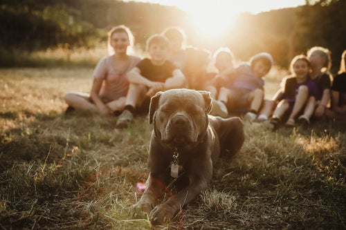 Image of Reserved for Brittany - Puppy Session