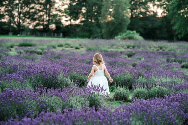 Image of Lavender Mini Sessions- July 3rd (evening)