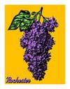 11x14'' Lilac Print