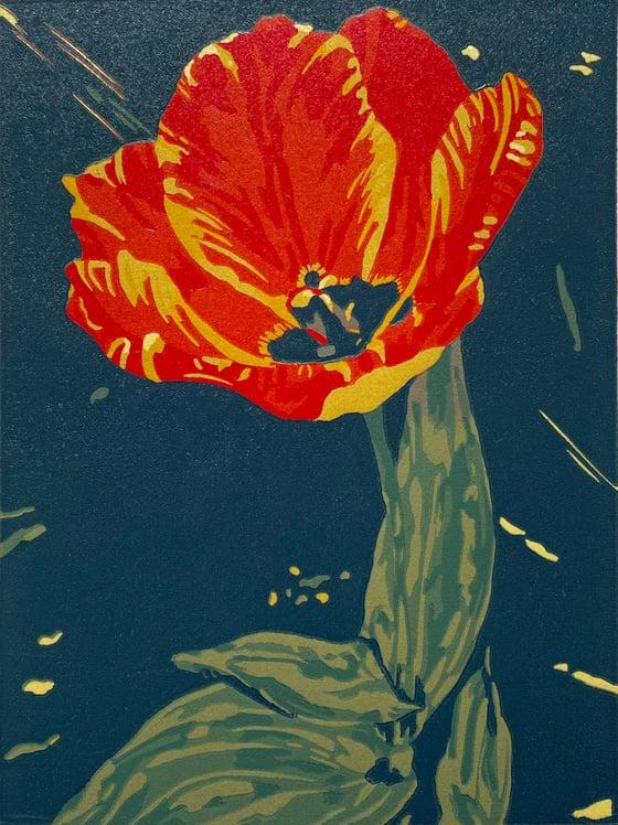 Image of Tulip Daze