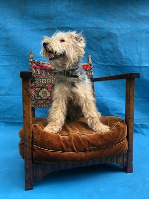 Image of Chair Dog Bed for a Prince or Princess