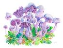 Image 2 of Mushrooms - Laccaria Amethystina
