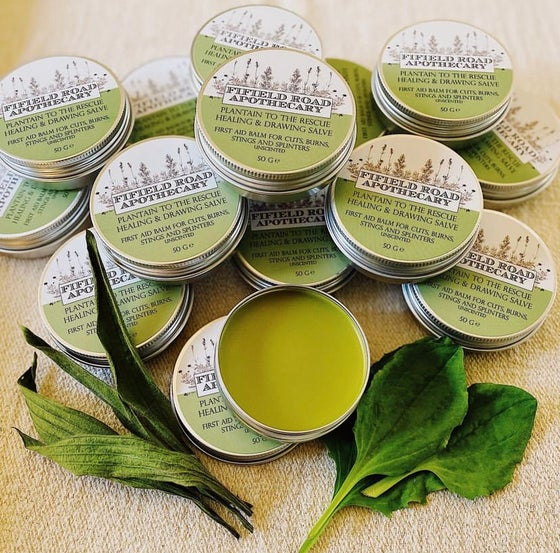 Image of Plantain to the Rescue Healing and Drawing Salve