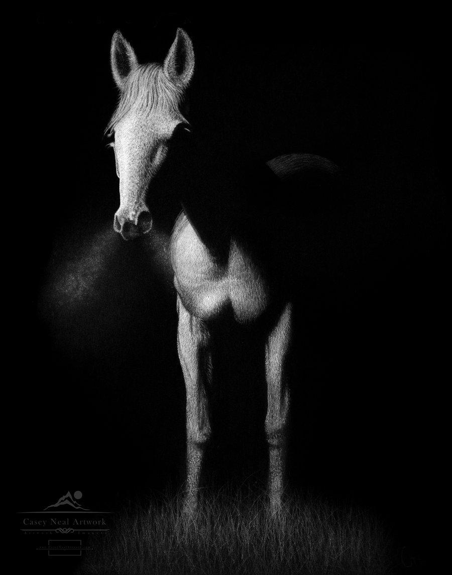 Image of The Stallion