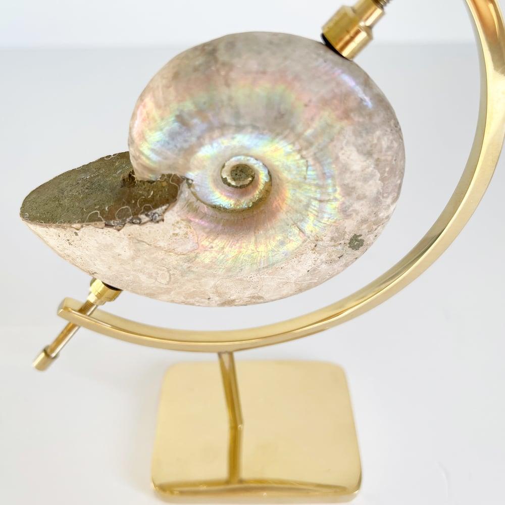 Image of Iridescent Rainbow Ammonite No.53 + Brass Arc Stand