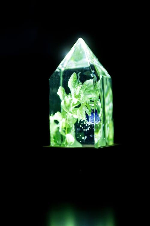 Image of Honeywort (Cerinthe major) - Floral Night-Light #3