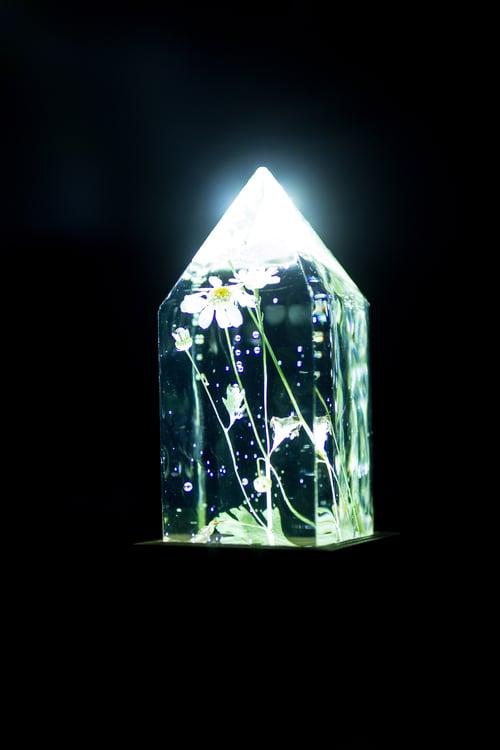 Image of Feverfew (Tanacetum parthenium) - Floral Prism Desk Light #3