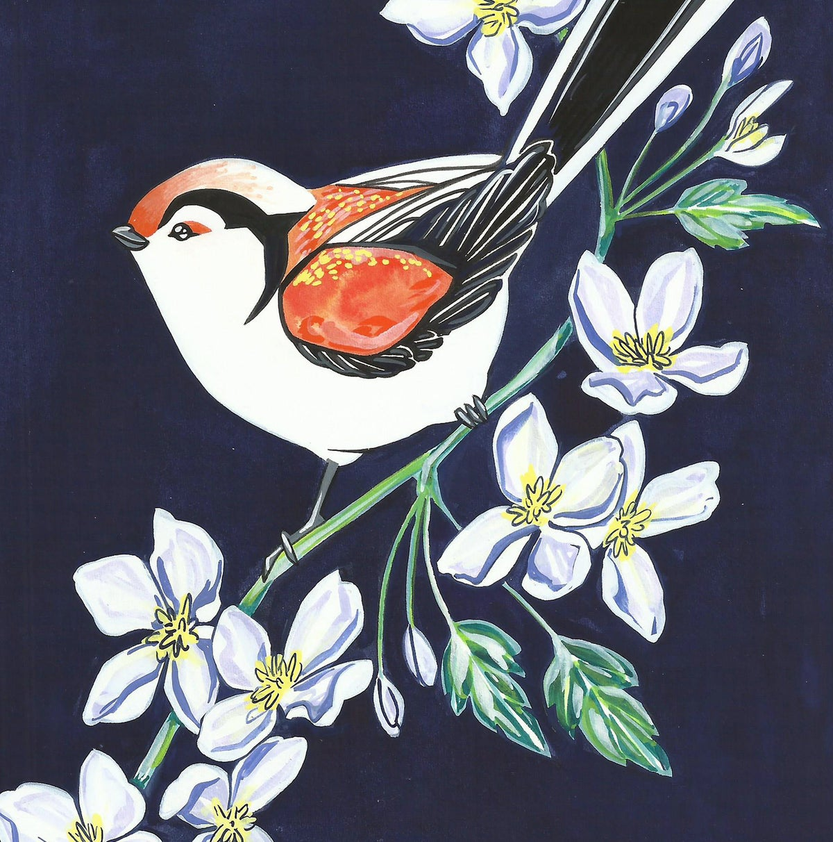 Image of Long Tailed Tit and Clematis