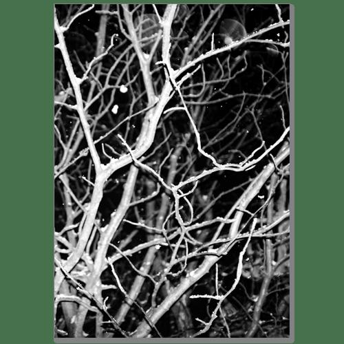 Image of Al Palmer - Blind