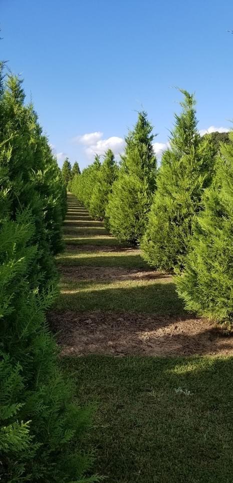 Image of Tree Farm Session