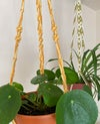 Picnic Plant Hangers