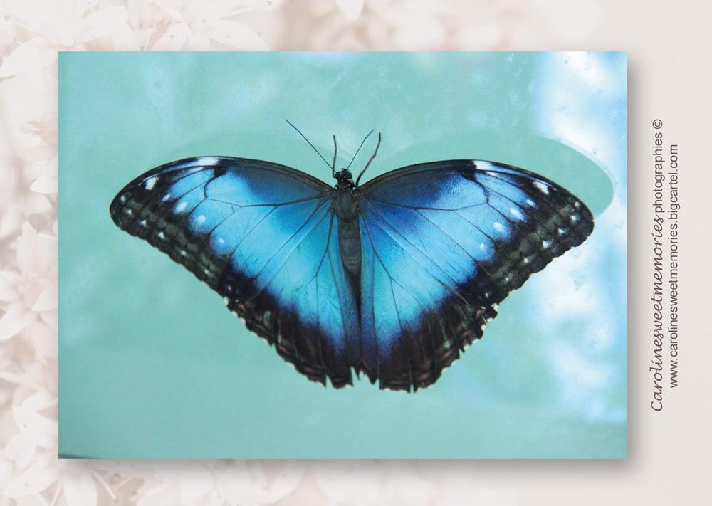 Image of Le papillon bleu | carte postale