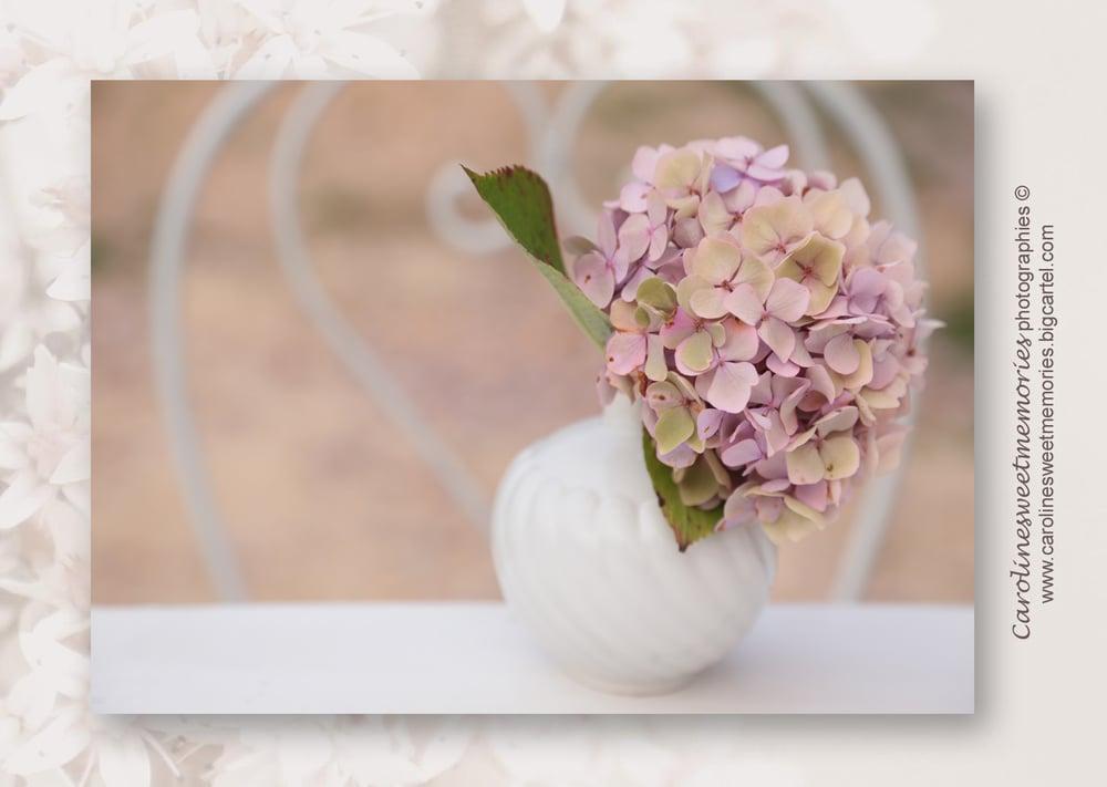 Image of L'hortensia rosé | carte postale