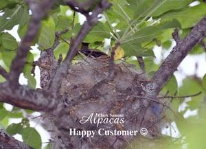 Bird Nesting Materials Alpaca Fiber Refill - All Natural