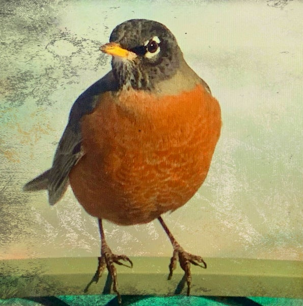 Image of Robin (note card)
