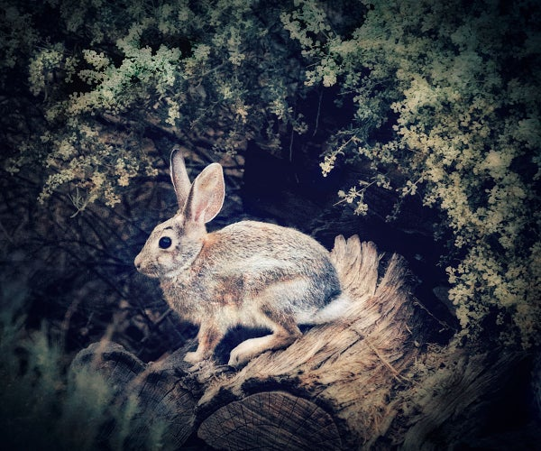 Image of Rabbit (note card)