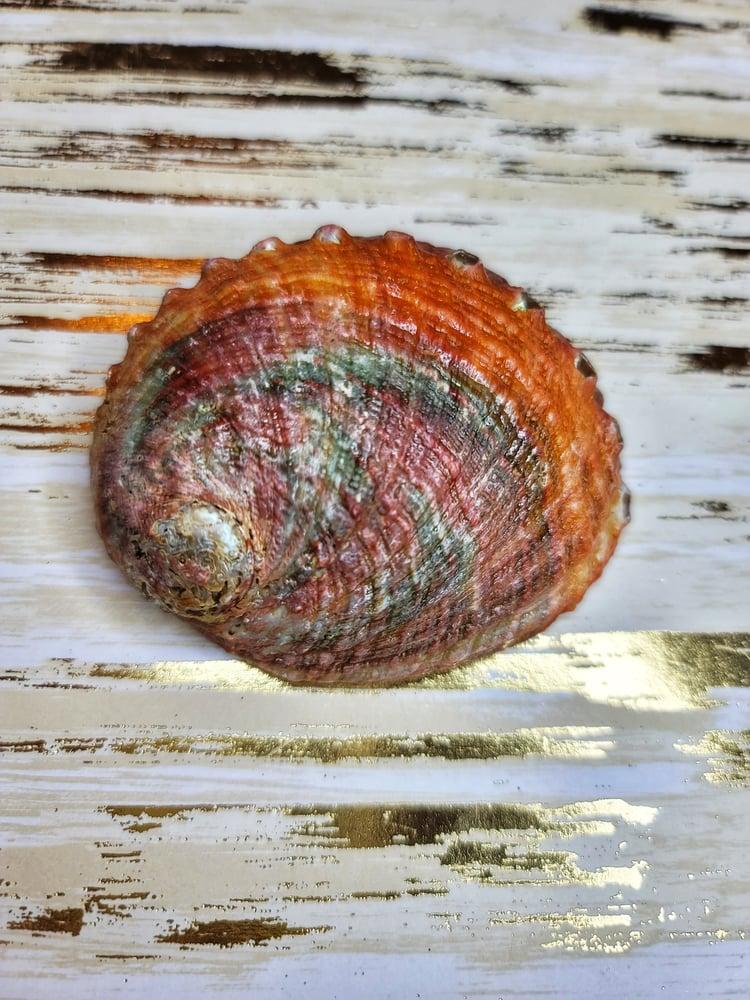 Image of Abalone Shell (Small)