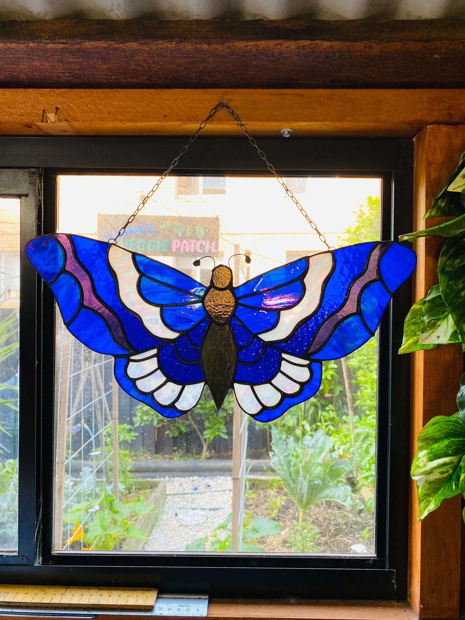 Image of Blue iridescent butterfly