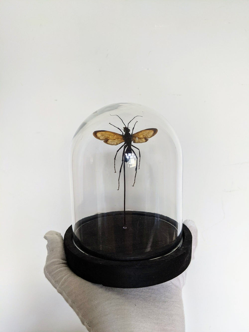 Giant Wasp Dome