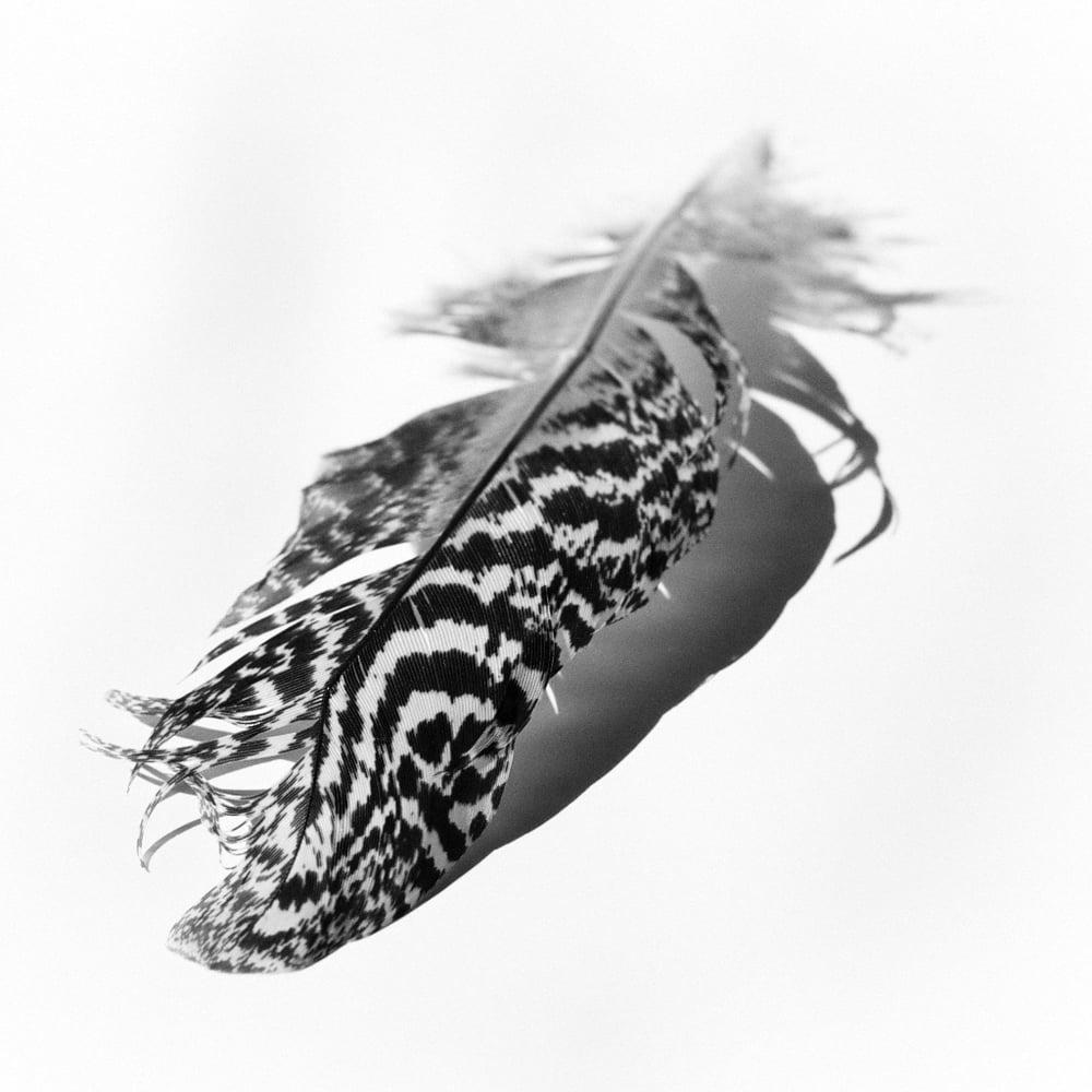Image of Feather I