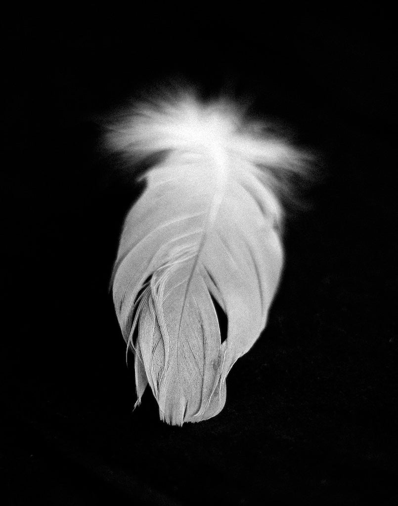 Image of Feather II