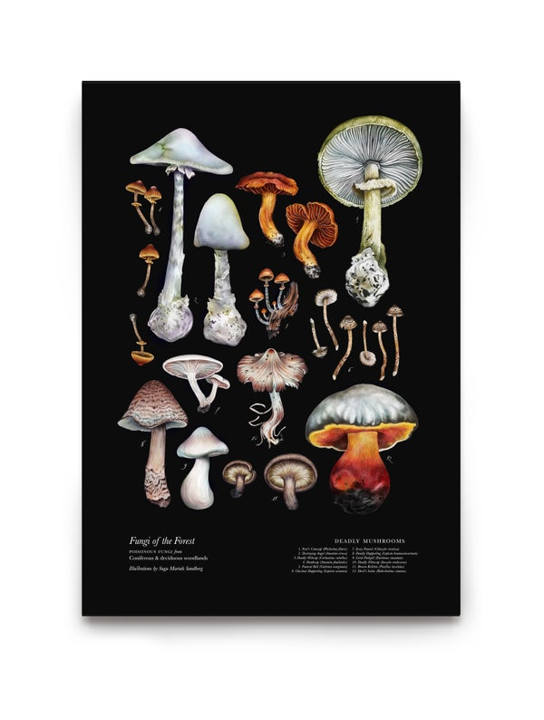 Image of Deadly Mushrooms (English)