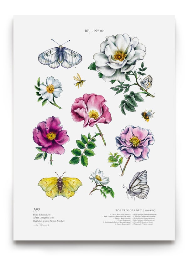Image of THE WILD ROSES
