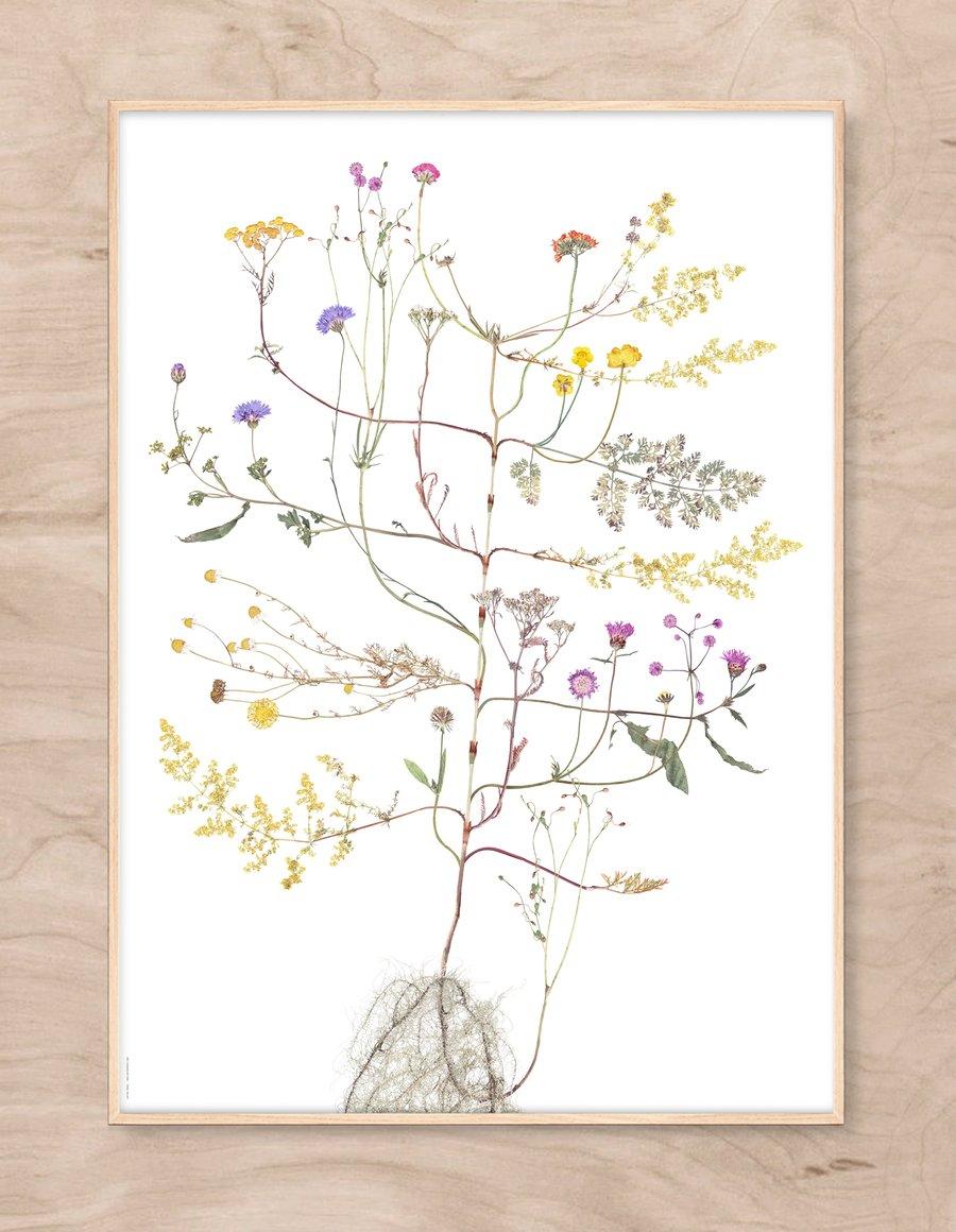 Image of Summer Tree