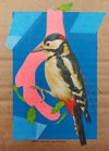 Great spotted woodpecker collage