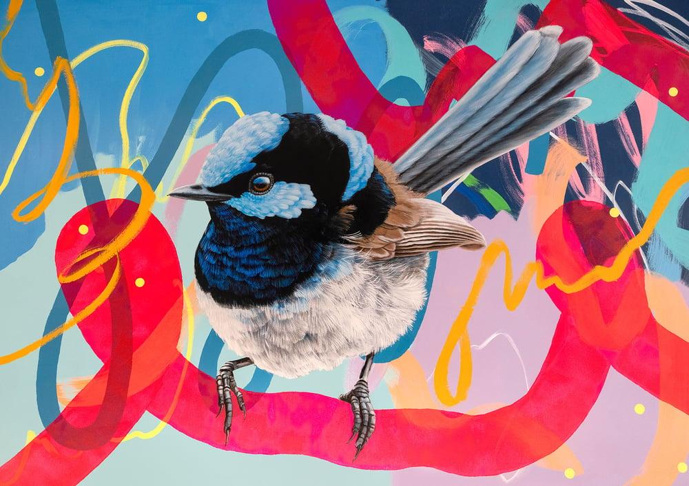 Image of JK Colab - Blue Wren