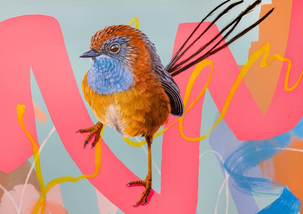 Image of JK Colab - Emu Wren