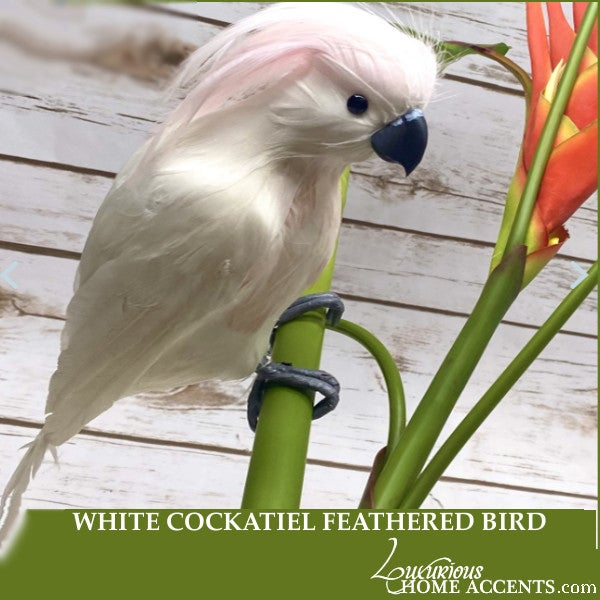 Image of White Cockatiel Feathered Bird