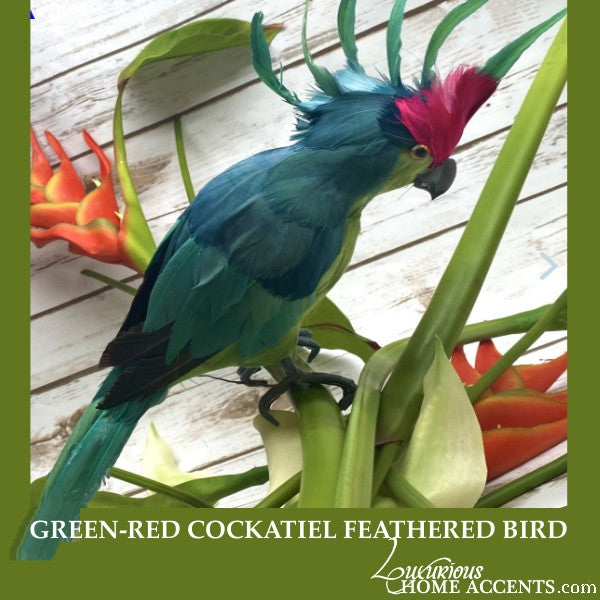 Image of Green and Red Cockatiel Feathered Bird