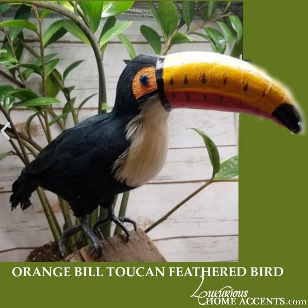 Image of Orange Bill Toucan Feathered Bird