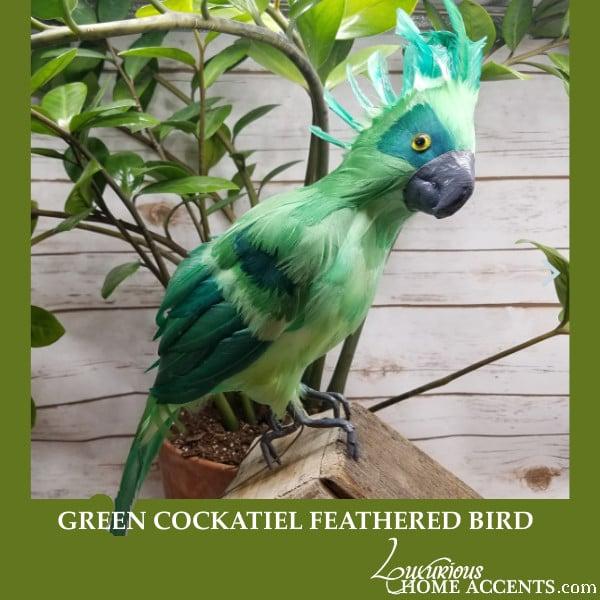 Image of Green Cockatiel Feathered Bird