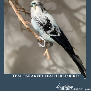 Image of Teal Feathered Parakeet