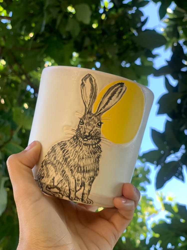 Image of Sunrise Hare