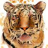 Fierce Tiger  - Artwork  - Prints