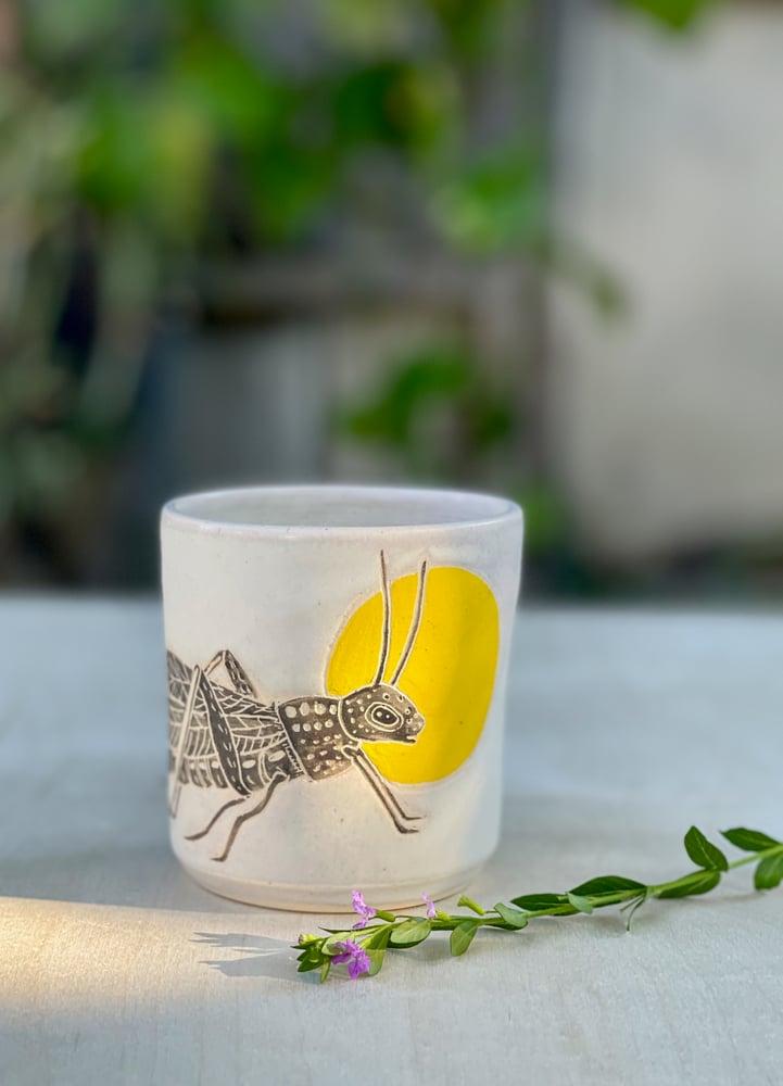 Image of Sunrise grasshopper