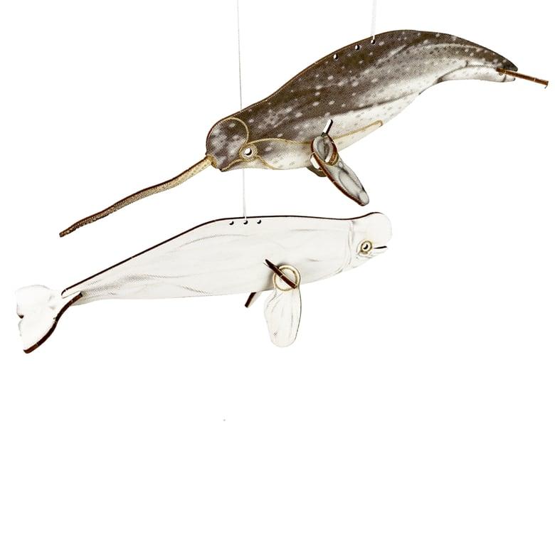 Image of JCR WHALES : NARWHAL + BELUGA Monodontidae FAM-PACK