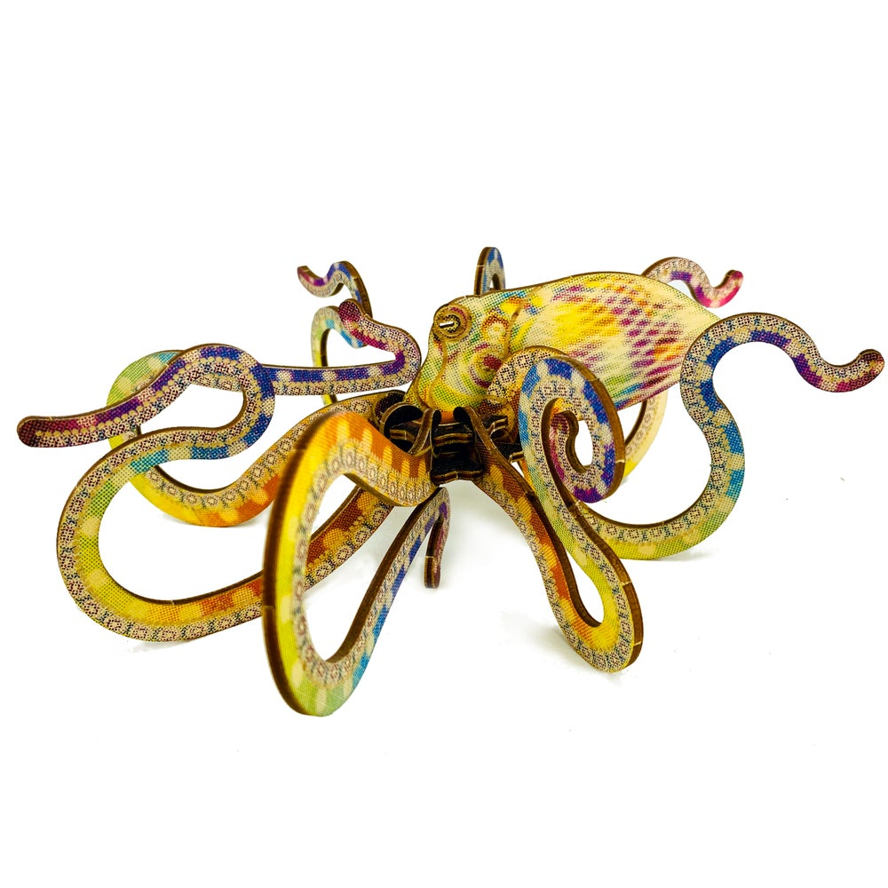 Image of JCR MOLLUSCA : OCTOPUS
