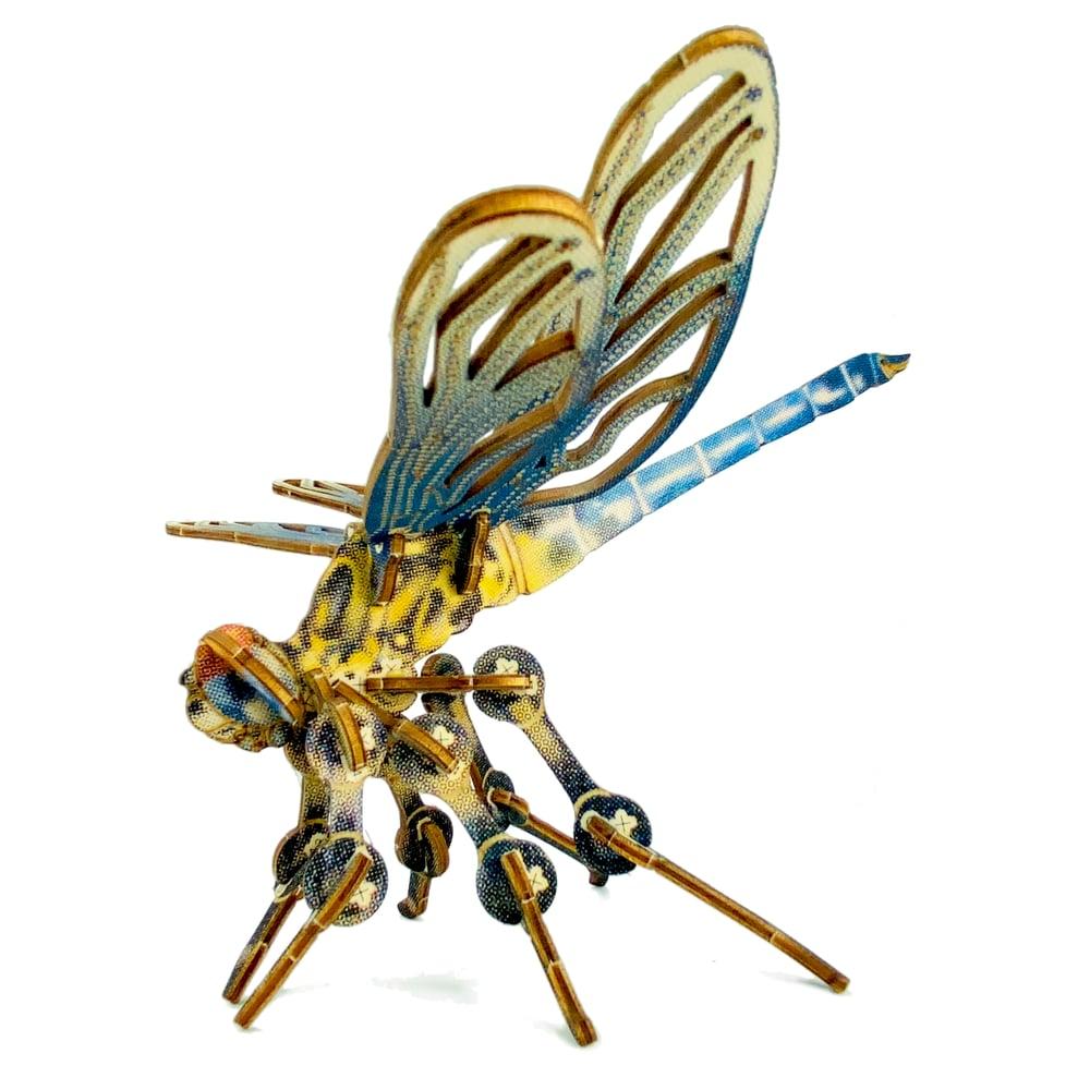 Image of JCR ARTHROPODA : DRAGONFLY