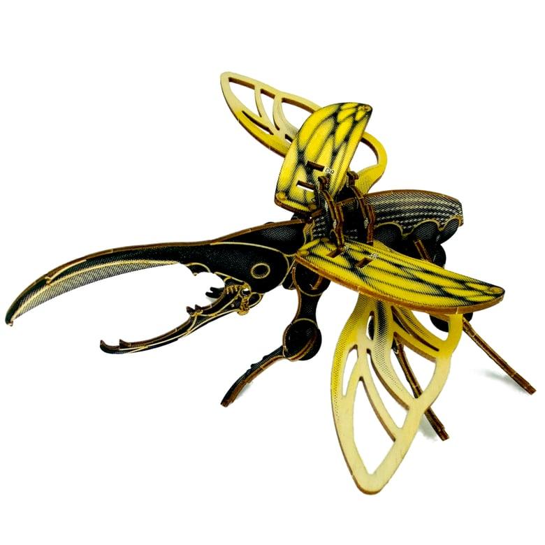 Image of JCR ARTHROPODA : BEETLE