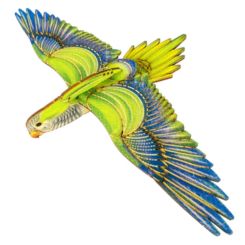Image of JCR BIRDS :  MONK PARAKEET