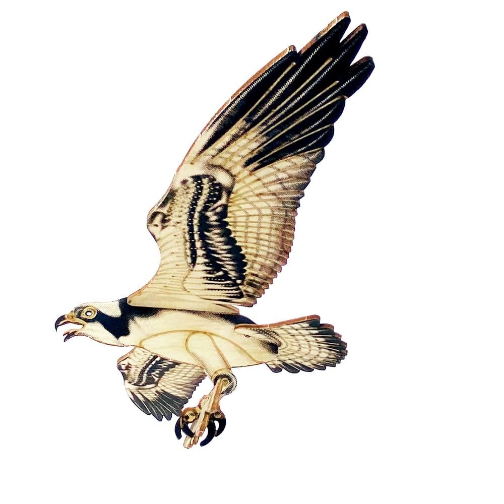Image of JCR BIRDS : OSPREY