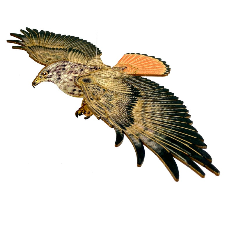 Image of JCR BIRDS : RED-TAILED HAWK