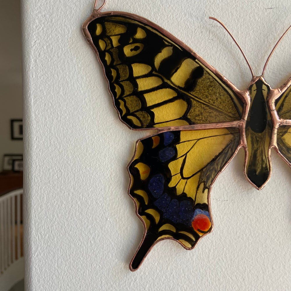 Image of Old World Swallowtail Butterfly