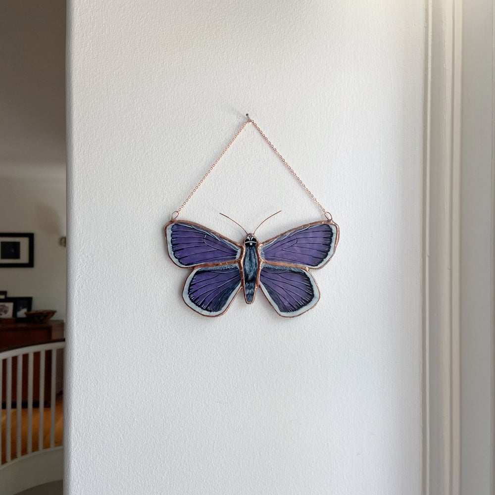 Image of Silver-Studded Blue Butterfly