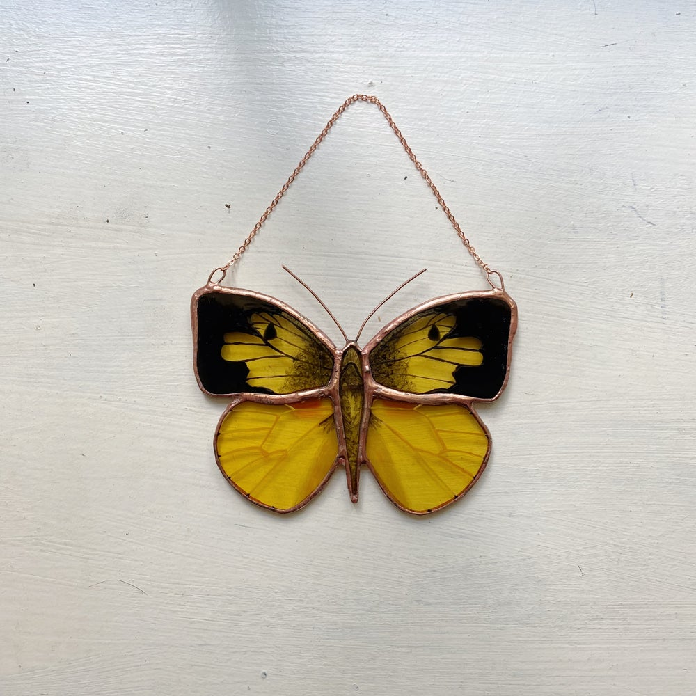 Image of California Dogface Butterfly